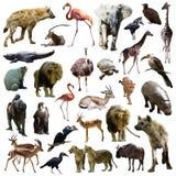 Uppsättning av hyenor och andra afrikanska djur Arkivbilder