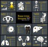 Uppsättning av infographics för mänskliga system royaltyfri illustrationer