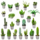 Uppsättning av inomhus växter i krukar - kaktus som isoleras på vit Royaltyfri Bild