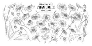 Uppsättning av isolerad kamomill i 33 stilar royaltyfri bild