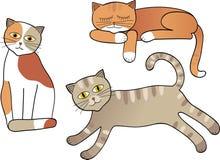 Uppsättning av isolerade katter Fotografering för Bildbyråer