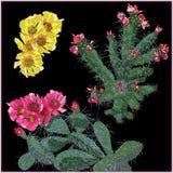 Uppsättning av kaktus royaltyfri illustrationer
