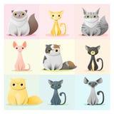 Uppsättning av kattfamiljen Royaltyfria Bilder