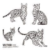 Uppsättning av kattkonturer på en vit bakgrund också vektor för coreldrawillustration Royaltyfria Foton