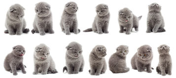 Uppsättning av kattungar Royaltyfri Bild
