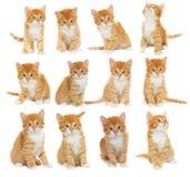 Uppsättning av kattungar Arkivbilder