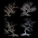 Uppsättning av krokiga kala träd Arkivbild