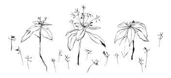 Uppsättning av lösa blommor Vektorbild som målas av färgpulver Dragen illustration för svart hand Arkivfoton