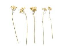 Uppsättning av lösa blommor, vit bakgrund Arkivbilder