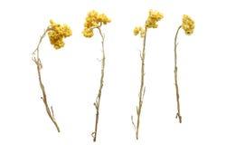 Uppsättning av lösa blommor, vit bakgrund Fotografering för Bildbyråer