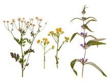 Uppsättning av lösa torra pressande blommor och sidor Royaltyfria Foton