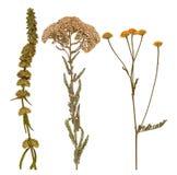 Uppsättning av lösa torra pressande blommor och sidor Arkivbild