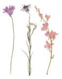 Uppsättning av lösa torra pressande blommor och sidor Arkivfoton