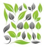 Uppsättning av leafdesignbeståndsdelar Arkivbild