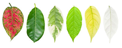 Uppsättning av leafen som isoleras på vit Royaltyfria Bilder