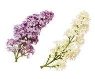 Uppsättning av lila blommor arkivbild