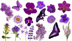 Uppsättning av lila färgfjärilar och blommor Royaltyfria Foton