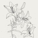 Uppsättning av liljor på vit bakgrund Royaltyfri Foto