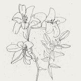 Uppsättning av liljor på vit bakgrund Royaltyfri Fotografi