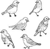 Uppsättning av linjära teckningsfåglar Royaltyfri Foto