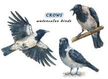 Uppsättning av lugna och flygfåglar för ilskna galanden -, stock illustrationer