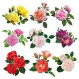 Uppsättning av mångfärgade rosor Royaltyfri Fotografi