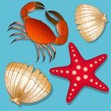 Uppsättning av marin- invånare Krabba, sjöstjärna och skal objekt Royaltyfri Illustrationer