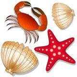 Uppsättning av marin- invånare Krabba, sjöstjärna och skal Vit bakgrund objekt stock illustrationer