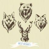 Uppsättning av markör hand-drog skogdjur: varg björn, hjort, räv Royaltyfria Bilder