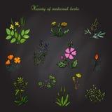 Uppsättning av medicinalväxter Stock Illustrationer