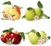 Uppsättning av mogna äpplen Arkivbilder