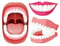 Uppsättning av mun och tänder royaltyfri illustrationer