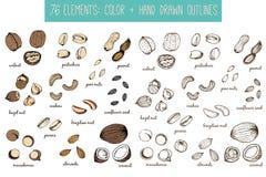 Uppsättning av mutter- och fröteckningar skissar hand-teckning Fotografering för Bildbyråer