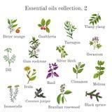Uppsättning av nödvändiga oljeväxter Hand dragen ectorillustration Royaltyfri Bild