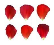 Uppsättning av naturalistiska Rose Petals också vektor för coreldrawillustration royaltyfri illustrationer
