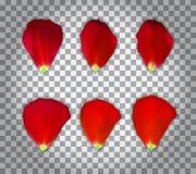 Uppsättning av naturalistiska Rose Petals på genomskinlig bakgrund också vektor för coreldrawillustration stock illustrationer