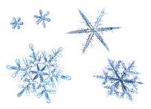 Uppsättning av naturliga snöflingor som isoleras på en vit bakgrund royaltyfri bild