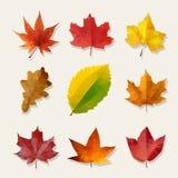 Uppsättning av nio vektor låga Poly Autumn Leaves Arkivfoton