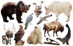 Uppsättning av nord - isolerade amerikanska djur Arkivfoto