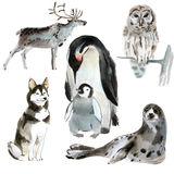 Uppsättning av nordliga djur Vattenfärgillustration i vit bakgrund Arkivbilder