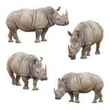 Uppsättning av noshörningen som isoleras på en vitbakgrund Arkivfoto
