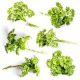 Lockig parsley Fotografering för Bildbyråer