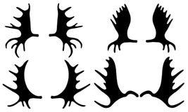 Uppsättning av olika älghorn på kronhjort Royaltyfri Bild