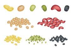 Uppsättning av olika bönor på vit bakgrund Arkivbild