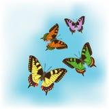 Fyra olika fjärilar Arkivfoto