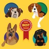 Uppsättning av olika hundavel Arkivbild