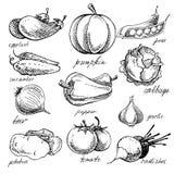 Uppsättning av olika klotter, hand drog grönsaker Royaltyfria Bilder