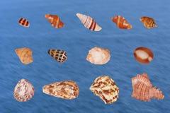 Uppsättning av olika skal av skaldjur från Indiska oceanenisolaen Arkivbild