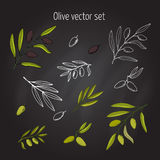 Uppsättning av olivgröna filialer Stock Illustrationer