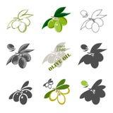 Uppsättning av olivoljaetiketter och designbeståndsdelar Arkivbild